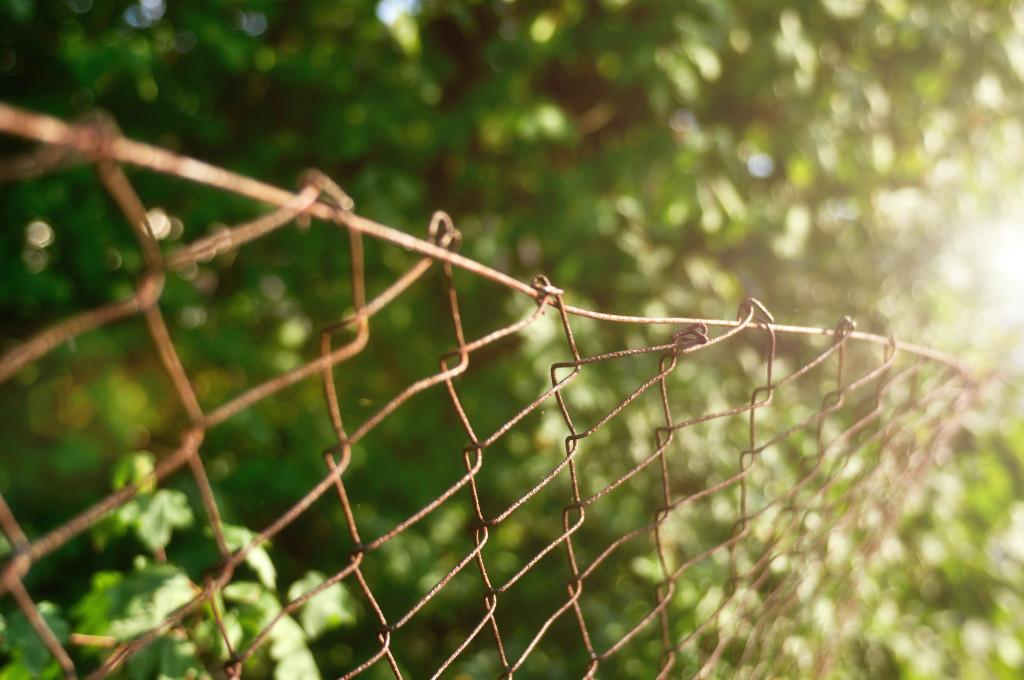 Die Schönheit der Natur umgeben von einem vor sich hin rostenden Zaun aus Metall
